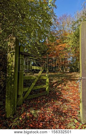 A gate into a wood in autumn