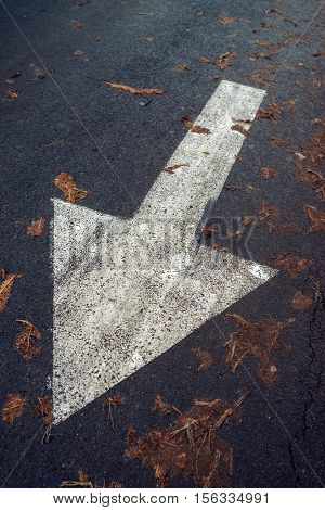 White arrow on asphalt road traffic sign marking on roadway with autumn leaves