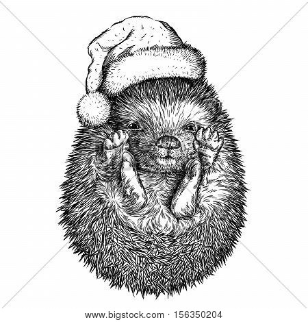 hedgehog, black and white engrave. Christmas hat.