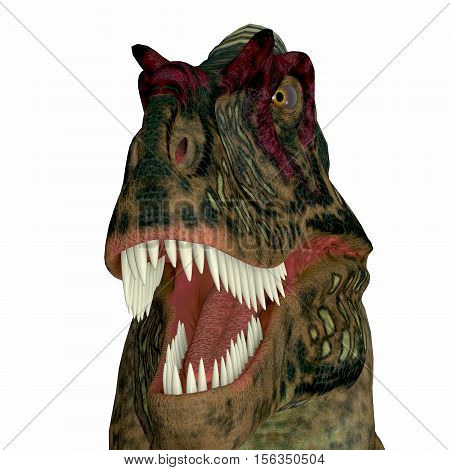 Albertosaurus Dinosaur Head 3D Illustration - Albertosaurus was a theropod carnivorous dinosaur that lived in the Cretaceous Period of North America.