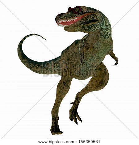 Albertosaurus Dinosaur on White 3D Illustration - Albertosaurus was a theropod carnivorous dinosaur that lived in the Cretaceous Period of North America.