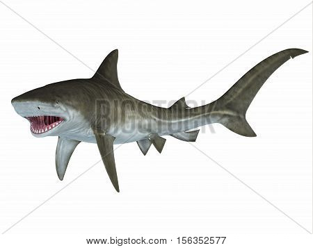 Tiger Shark Attack Posture 3D Illustration - When a shark threatens to attack the pectoral fins are in a down position as the fish advances on its prey.
