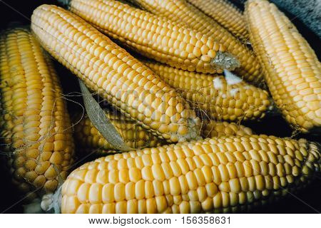 Organic Boiled Corn. Background, Texture Of Organic Corn Cooked In The Pan.