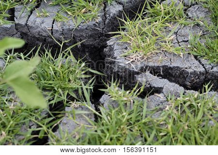 Green Grass Growing On Gray Mud With Deep Cracks From Dryness