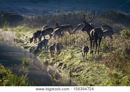Deer Standing On The Frozen Meadow Near The River At Sunrise