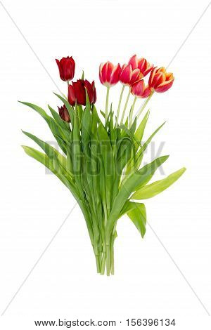 Isolated Bunch Of Colorful Red And Orange Tulips