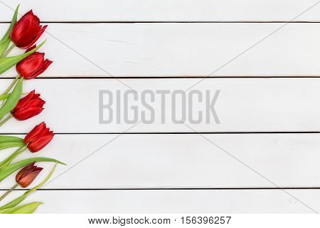 Colorful diagonally angled scarlet red fresh spring tulip border with green leaves on a white stained wood table at a farmers market or floriculture farm with copy space