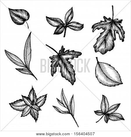 vintage vector floral set of isolated elements in victorian style, different leaves of trees and plants, ink drawing, imitation of engraving, hand drawn design elements