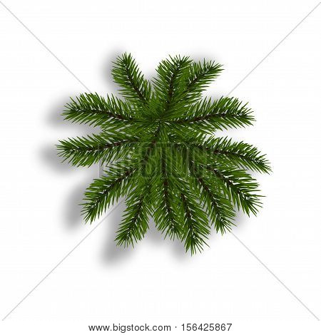 Green fir with realistic shadow. View from above. Fir branches. Isolated on white background. Christmas vector illustration