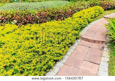Foothpath With Ornamental Plants