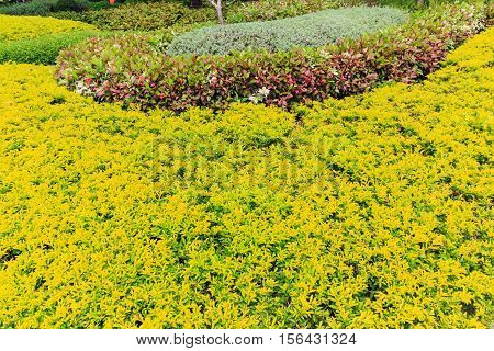 Ornamental plants in the garden., front yard