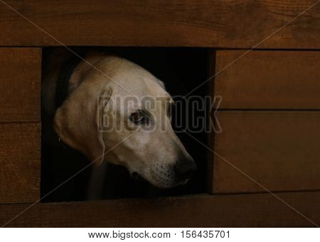 Portrait of sad dog in kennel, close up view