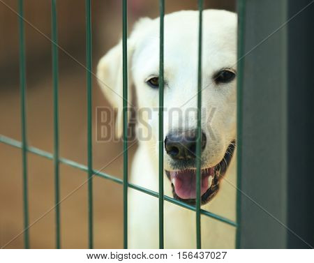 Portrait of white homeless dog in animal shelter cage