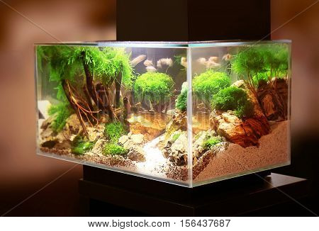 Pet shop aquarium