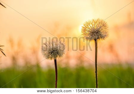 thick morning fog in the summer forest. thick morning fog in the forest at pond. Morning landscape in summer thick fog. dense fog in the morning.  early morning. forest hiding in the fog. dandelion.