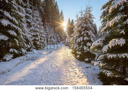 Magic winter landscape. Sun is setting over road in coniferous forest among snow covered fir trees.