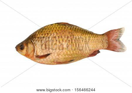 a gold carp isolated on white background