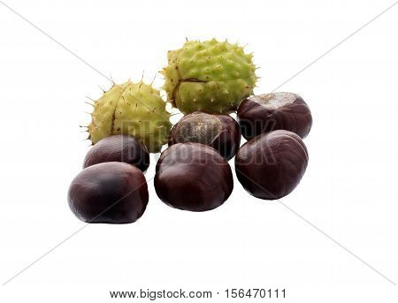 fruit chestnut on a white background .