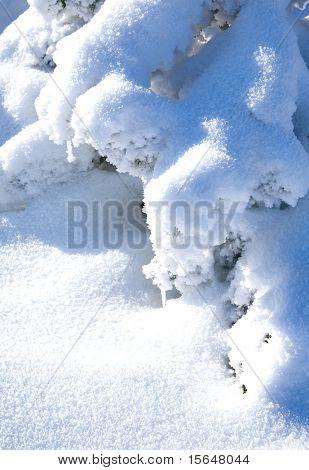 Snowbound branch of fir