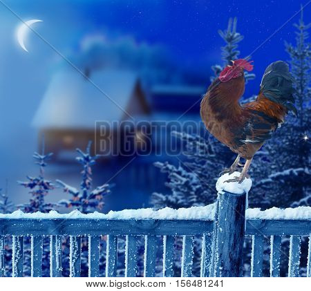 Rooster standing in winter Christmas landscape.Symbol of New Year 2017.Chinese zodiac year of rooster.Merry Christmas and happy New Year greeting card with rooster.