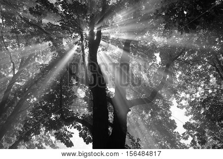 Light Particles in a tree in the prater park in Vienna