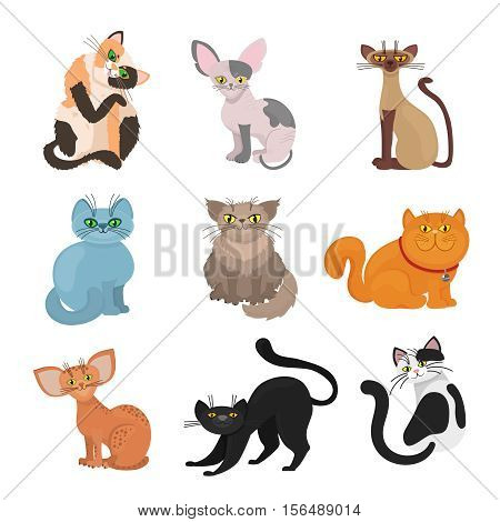 Cartoon domestic cats vector. Illustration of animal with tail and whiskers