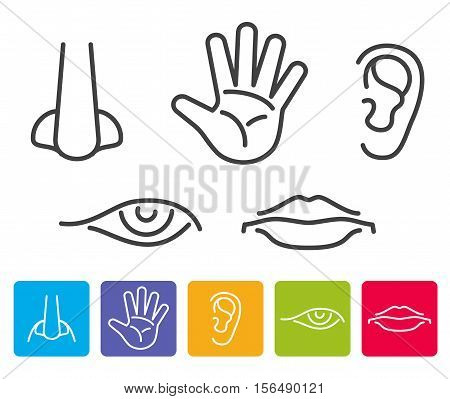 Five human senses smell, sight, hearing, taste, touch vector. Icons human sense, illustration of five senses