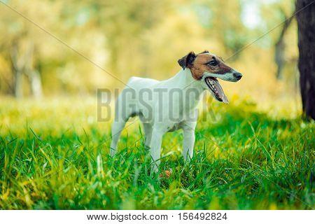 Dog playing outside smiles pet smile anima