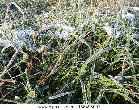 Frozen Green Grass In The Beginning Of Winter