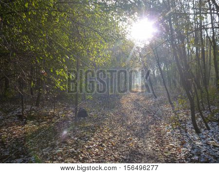 Beautiful Sunny Autumn Day In The Forest