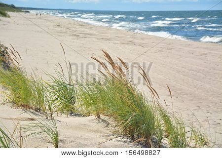 Fluffy grass on a background of the beach and sea waves.