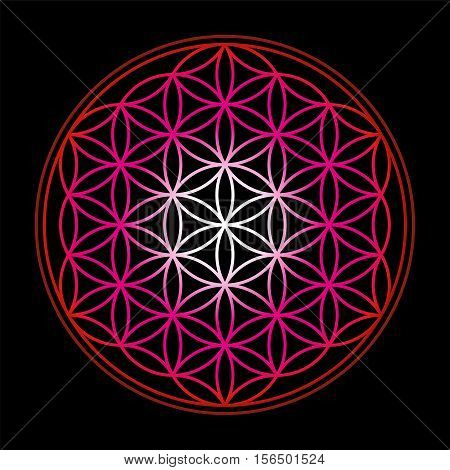 Flower of Life, symbol of harmony - red gradient on black background.