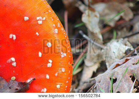 Cogumelo com pintas brancas no meio ambiente poster