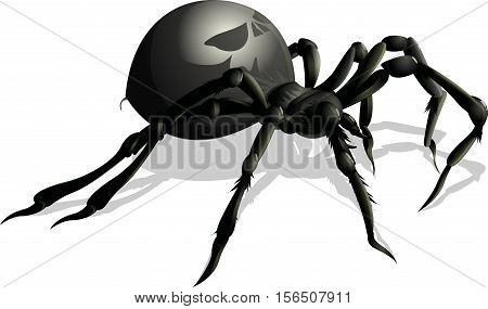 beautiful black spider on a white background