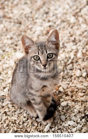 Portrait of stray kitten on the unfocused background poster