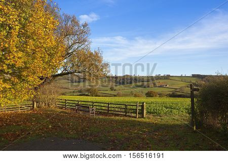Autumn Country Walking