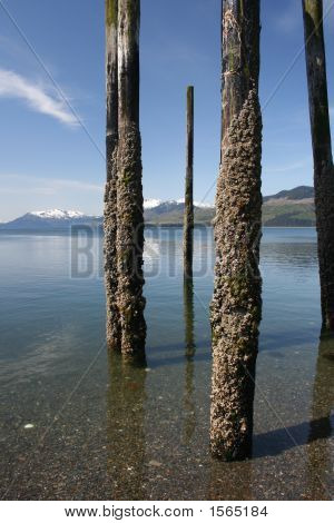 Crusty Pilings