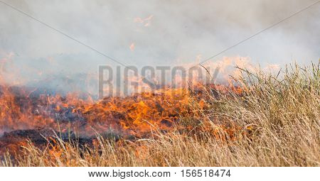 Dry grass burning with orange flames and lots of smoke
