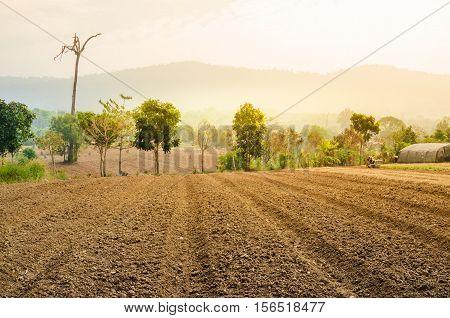 Plowed field farmland tillage for farming with soft warm light