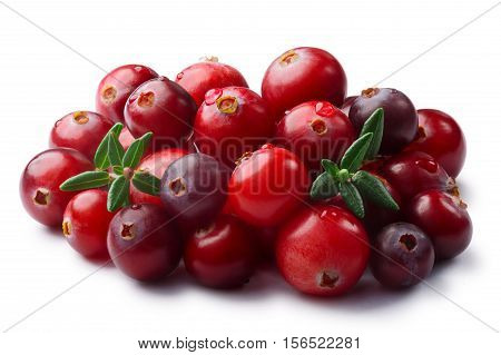 Wild Cranberries Heap, Leaves, Paths