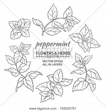 peppermint plant vector set on white background