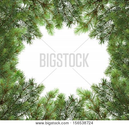 Background of Christmas tree branches/ Isolated on white background without shadows /Frame made of tree branches close-up. Christmas. New Year. Nature.