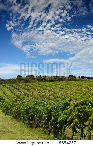Beautiful Australian Vineyard in Summer