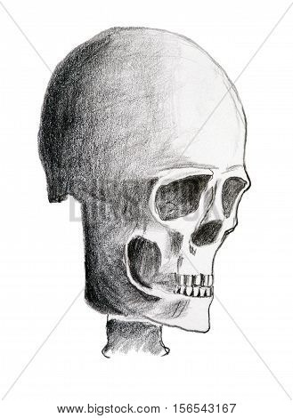 Hand drawing of the skull - pencil on paper