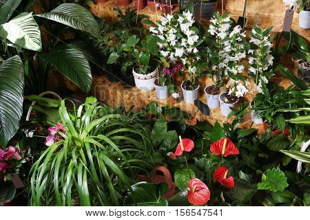 Assortment of beautiful flowers at floral shop