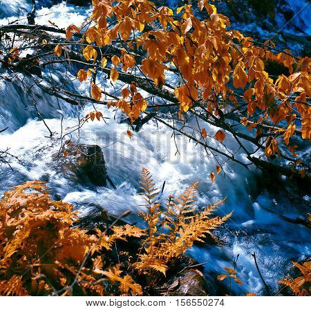Small waterfall in autumn forest. Nature background