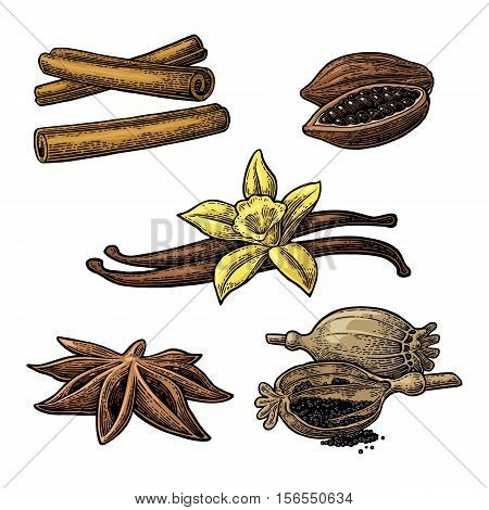 Set of spices. Anise star, cinnamon stick, fruits of cocoa beans, vanilla stick and flower, poppy heads and seeds. Isolated on white background. Vector color vintage engraving illustration.