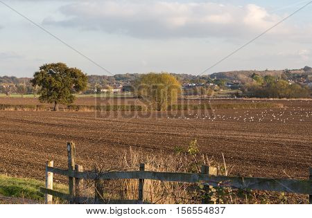 Ploughed field on farmland in Essex on a sunny November day