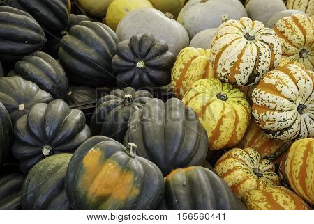 Market display of assorted types of acorn squash