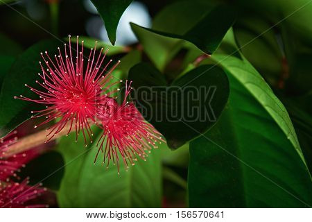 Perote Flower On Branch